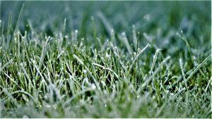 Lawn winterization